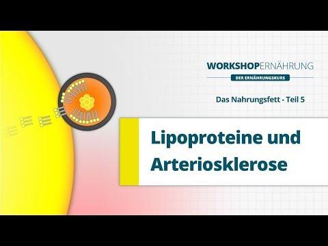 Descargar FETT (5/6): Die Lipoproteine (LDL, HDL, VLDL) | Workshop Ernährung