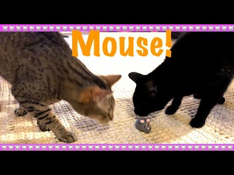 🐭CUTE CATS REACT TO MOTORIZED MOUSE🐭1 Year Later