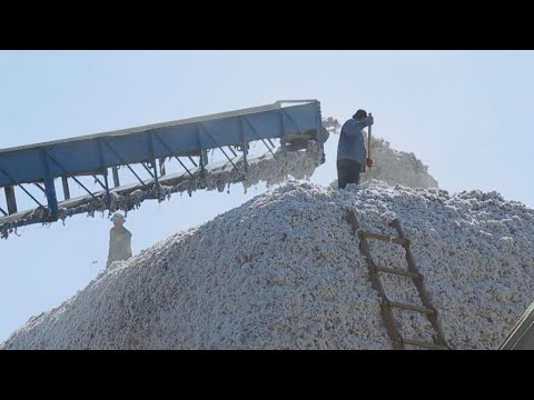 Access Asia - Uzbekistan addresses forced labour in state-run cotton industry