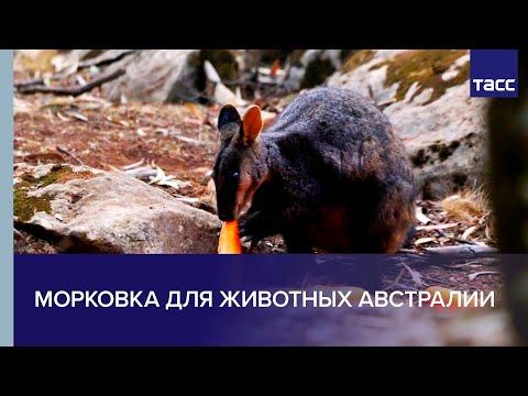 Морковка с неба: как помогают животным в Австралии