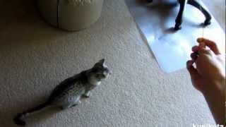 Египетская Мау - породы кошек