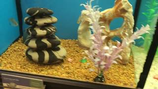 Trip to petsmart Red parrot fish and a cool tortoise