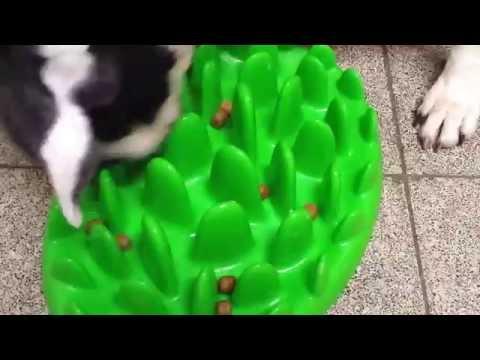 NORTHMATE Green anti glouton www.pournosanimaux.com