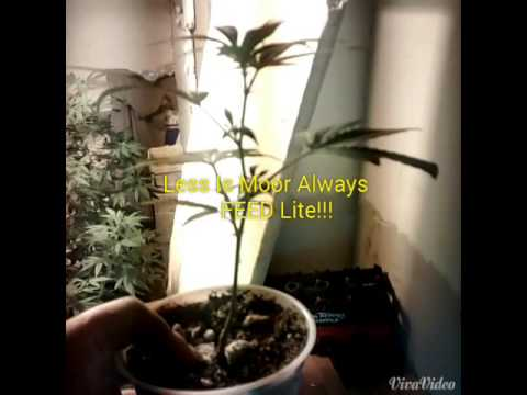 Home cannabis grow tip massive root structure!!!