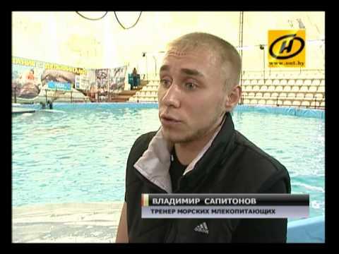В Минском дельфинарии родился дельфинёнок