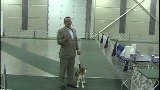 Dog Show Tips - Episode 5 - Movement Patterns
