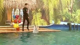 Дельфинарий в Уссурийске: реальное положение дел