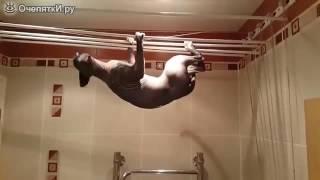 Кошка акробатка в ванной