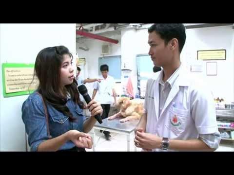 @kku-โรงพยาบาลสัตว์ คณะสัตวแพทยศาสตร์ มหาวิทยาลัยขอนแก่น