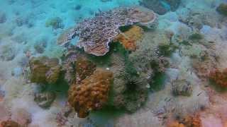 ใต้ทะเลเกาะล้าน พัทยา : Scuba Diving at Koh Larn, Pattaya
