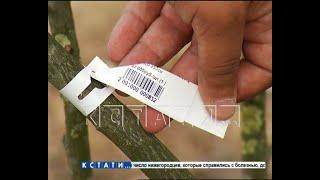 Березка по цене бюджетного автомобиля - в Московском районе сотни тысяч рублей закапывают в землю