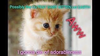 CUTEST Kitten Video On YouTube! Baby Kitten Playing |Ruby's Zoo