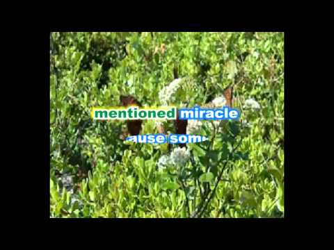 THE MIRACLE The Stylistics Karaoke