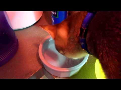 Cat Health - Distilled Water & Colloidal Silver