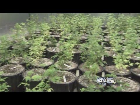 Florida Medical Marijuana Update
