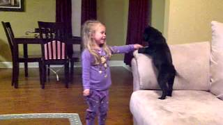 4 Year Old Madalyn gets Surprised with a Black Lab Puppy (Rapunzel)