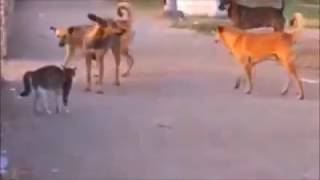 Боевые коты атакуют!