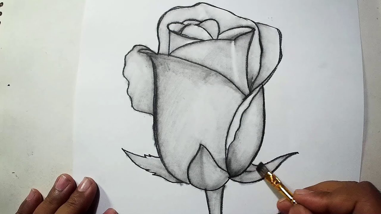 How to draw a rose pencil drawing shading for beginners
