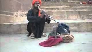 Indian Snake Charmer Real Music Authentic Bombay Street Monkey Coconut Barack Obama