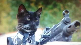 Oзвучка коты против зомби