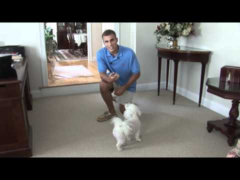Dog Training - Stay Command