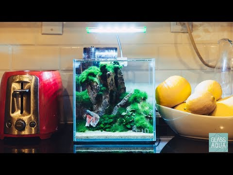 Planted Betta Fish Aquarium - 2 Gallon Tank