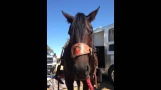 Barrel Horse Problems 2