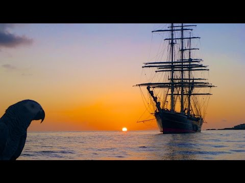 """SPECTACULAR Sunset in Simpson Bay with our Hilarious Parrot """"LUCKY""""!  St Maarten, SXM, CARIBBEAN!"""