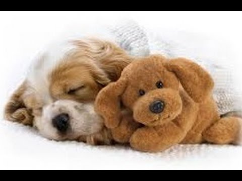 1 MINUTE OF SWEETNESS For Babies Pets ♥♥♥ Lovely Lullaby For Kittens and Puppies
