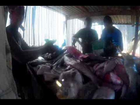 Fish market in Diego Suarez, Madagascar