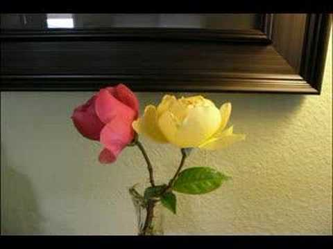 Time Lapse Flowers, Roses Life and Death