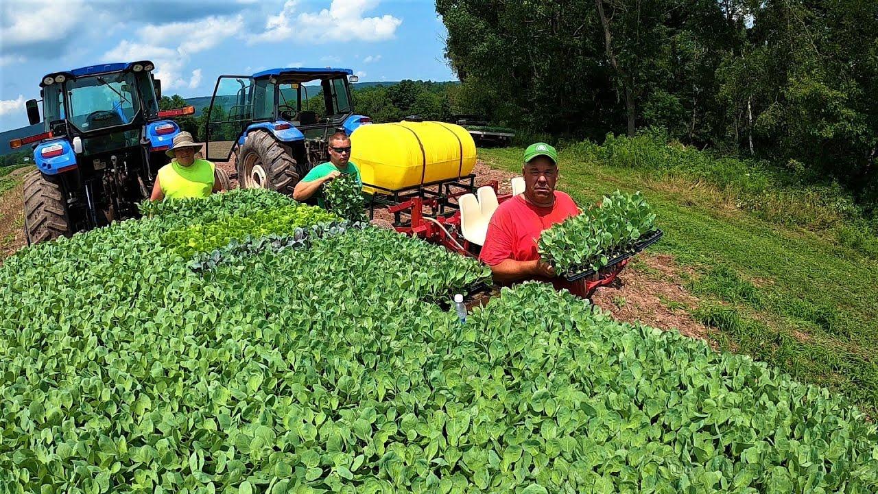 WAS OUR FARM ALWAYS A VEGETABLE FARM?