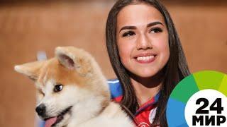 Загитовой вручили щенка акита-ину за победу на Олимпиаде - МИР 24