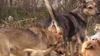 В крымской столице закрывают на ремонт единственный приют для бездомных животных
