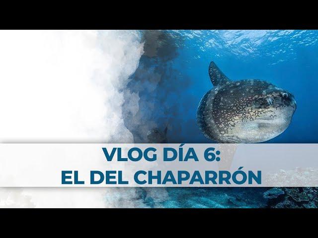 2 Little Divers Bali Vlog Día 6: El del Chaparrón