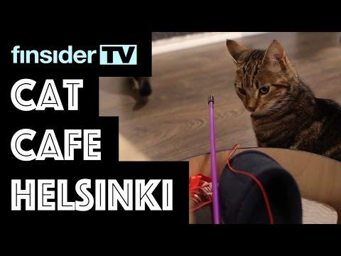 Cat Cafe Helsinki - FSTV
