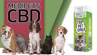 CBD Dog Dosage - MediPets Review!