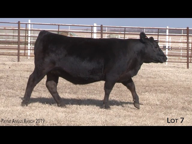 Payne Angus Ranch Lot 7