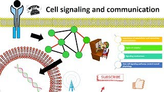 cell signaling overview thumbnail