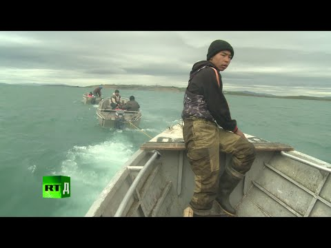 I am Hunter: traditional whaling in Russia's Chukotka Peninsula.