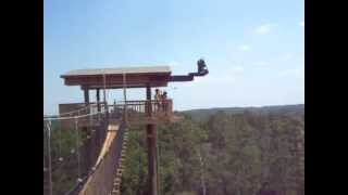 Panther Plunge at Florida EcoSafaris Thumbnail