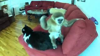 Обезьяна и кот, Monkey & Cat, кошки и собаки фото приколы