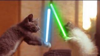 Good Vs. Evil: Benny Hinn, Cats & Star Wars