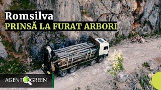 Romsilva Prinsă la Furat Arbori din Parcul Național Domogled