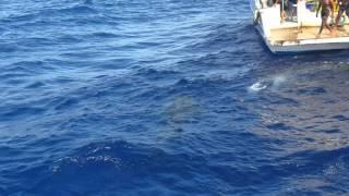 видео Почему акулы в Красном море нападают на туристов