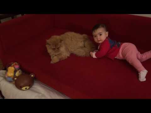 Baby & cat
