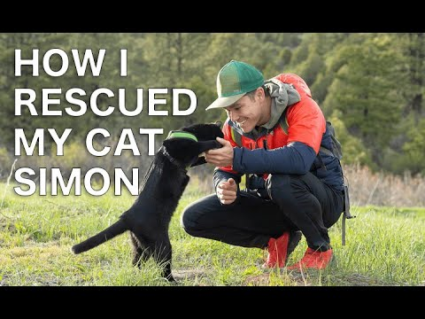 How I rescued my Cat Simon