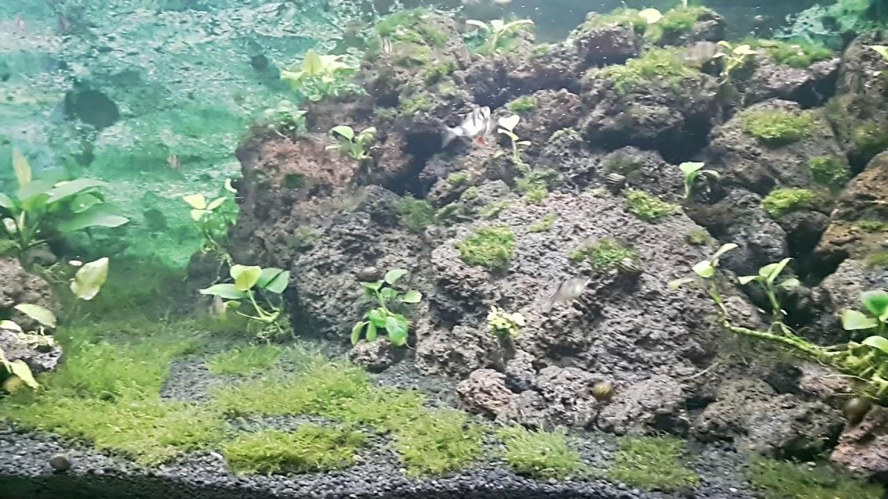 aquascape lava rock - YouTube