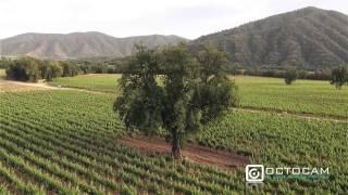 Viñas Chilenas Valle De Casablanca