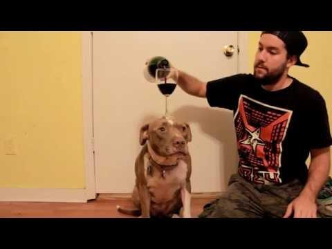 Eve The Pitbull Balancing Wine!!     Amazing Dog Trick!